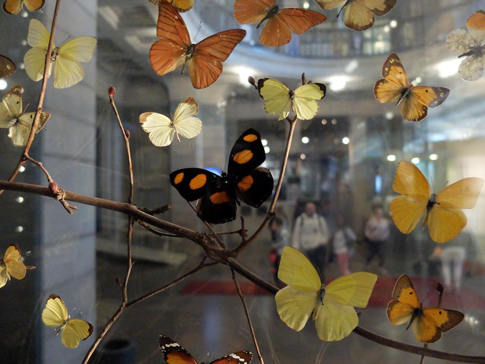 Naturhistoriska Riksmuseet, Stockholm | Julie Fahrenheit