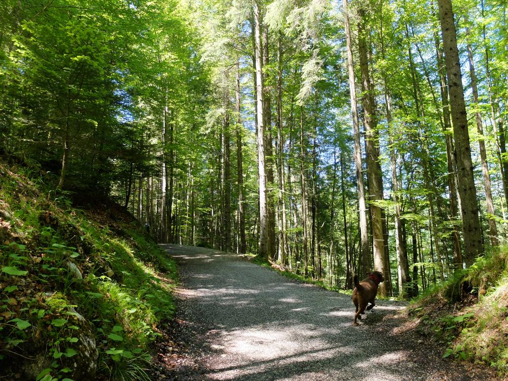 Eibsee, Bavaria | Julie Fahrenheit